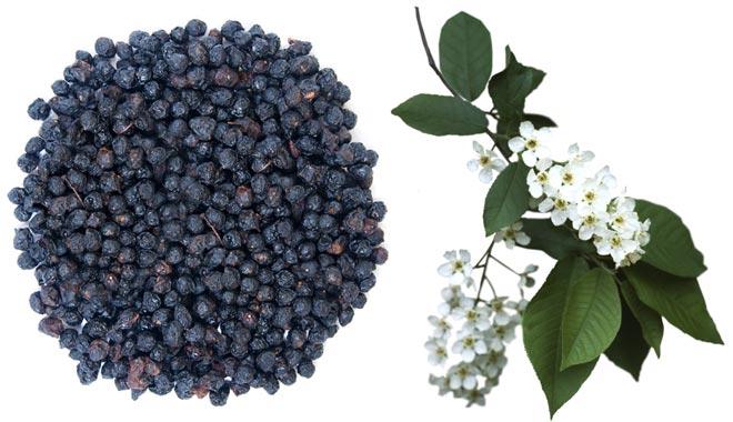 Черёмуха ягоды цветки